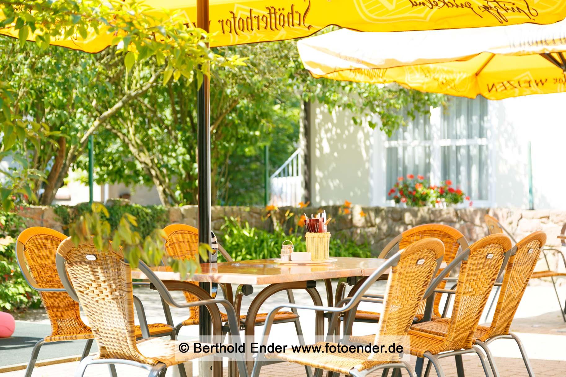 Goldener Fasan in Oranienbaum - Fotostudio Ender