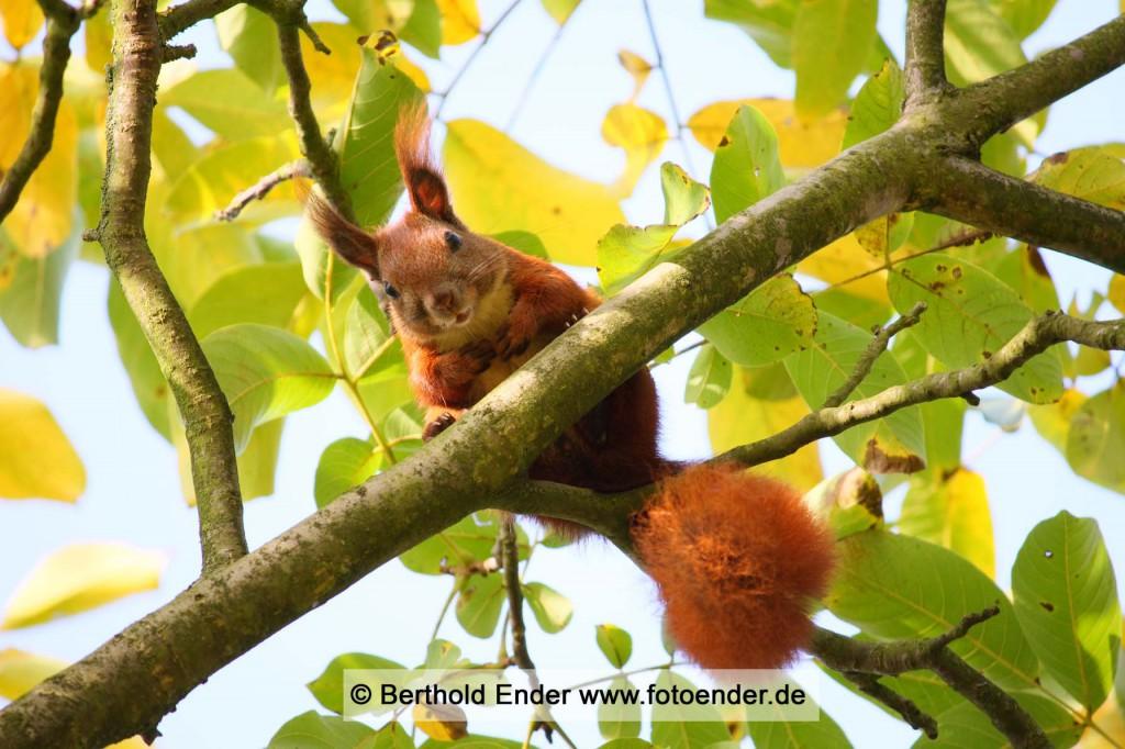 Tierbilder: Fotostudio Ender