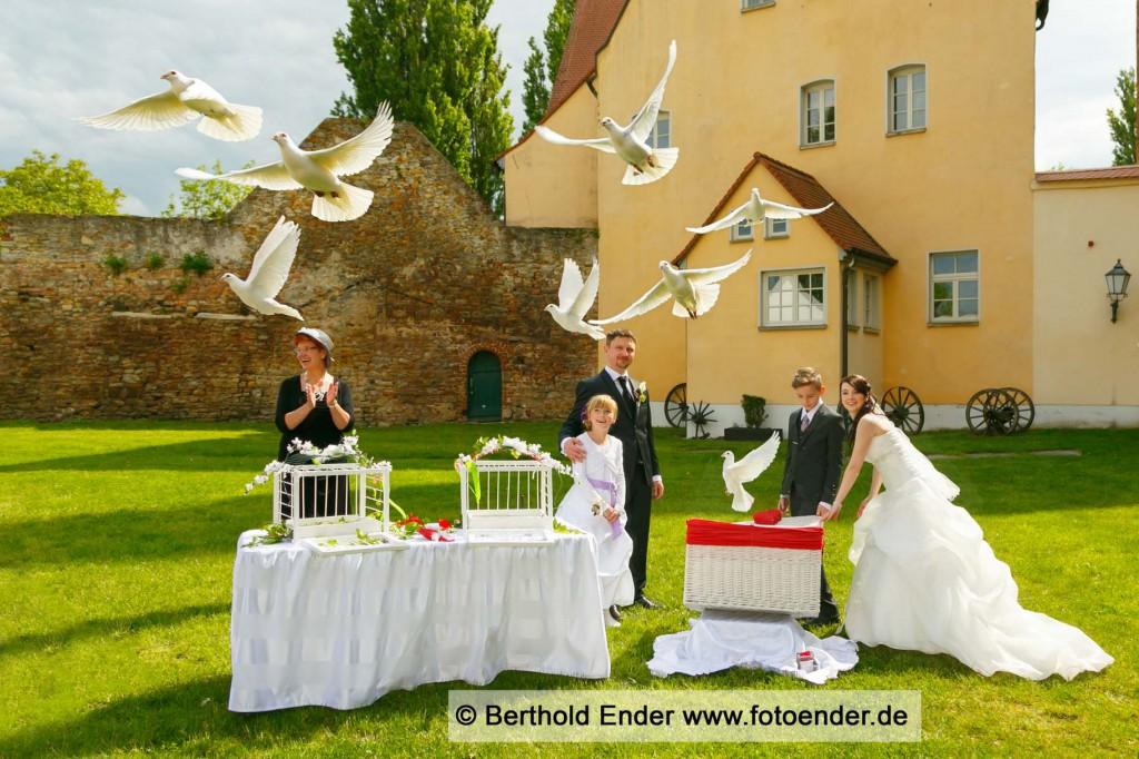 Hochzeitstauben auf der Wassenburg in Gommern