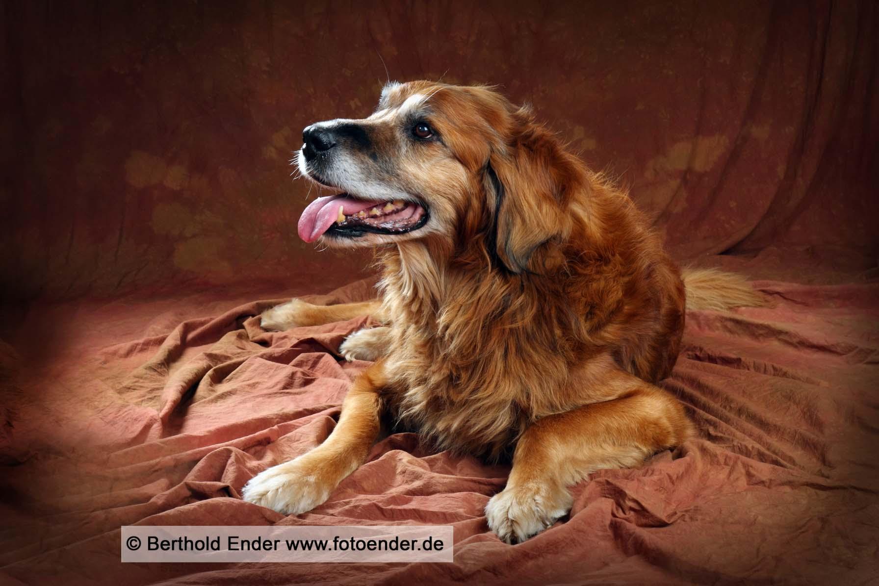 Hundebilder im Fotostudio Ender