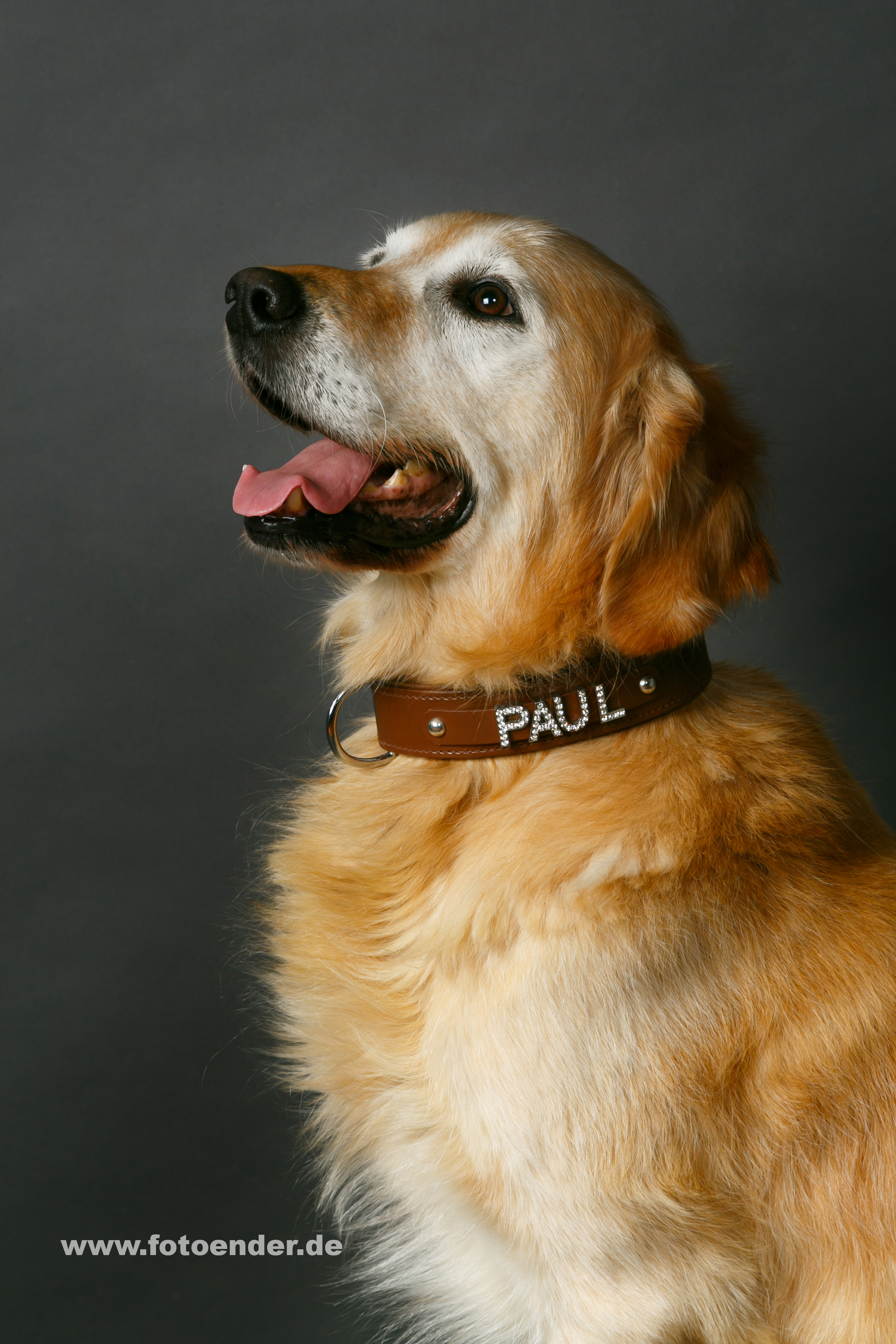 Tierfotografie Hund