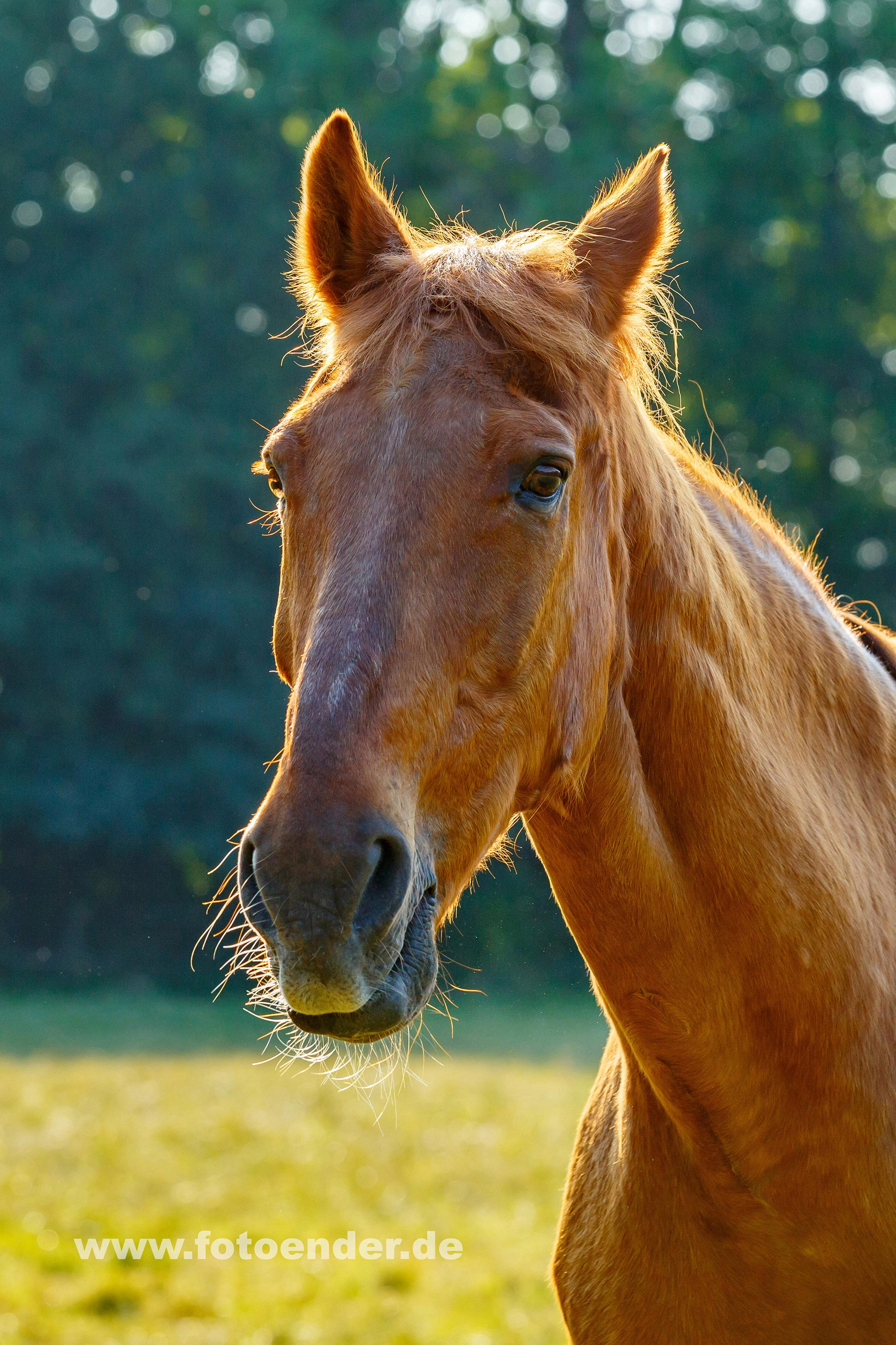 Pferdefotos in Neeken